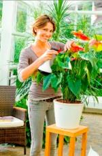 Orchideen-Seite.de - rund um die Orchidee ! | Foto: Pumpsprüher mit Mehrfachnutzen: Die Gloria Design Handsprüher eignen sich auch zum gießen ? und sehen super aus.