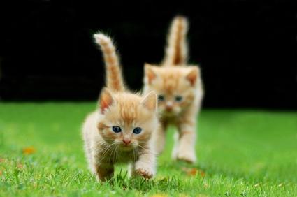 Katzenflüsterin