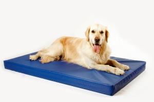 Aquaristik-Infos-247.de - Aquaristik Infos & Aquaristik Tipps | DoggyBed Hunde Komfortbetten