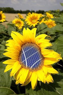 Alternative & Erneuerbare Energien News: Foto: Laut GEDEA-Ingelheim lohnen sich PV-Anlagen auch weiterhin, trotz Änderungen im EEG.