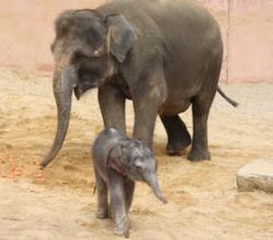 Tier Infos & Tier News @ Tier-News-247.de | Foto: Mit nur 3 Tagen auf Entdeckungstour.