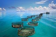 Landwirtschaft News & Agrarwirtschaft News @ Agrar-Center.de | Foto: Das Umwelt-Abkommen >> Grenelle de la Mer << soll zusätzlich den Schutz und die nachhaltige Nutzung der Meere besiegeln..