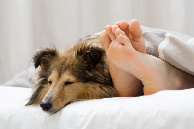 Shopping -News.de - Shopping Infos & Shopping Tipps | DoggyBed Hunde Komfortbetten