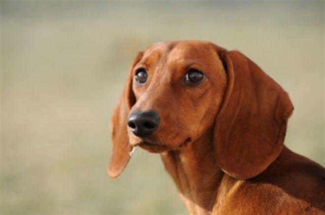 Hundehotel - Hundepension und Hundebetreuung Satke
