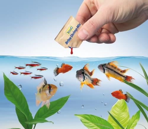 Aquaristik-Infos-247.de - Aquaristik Infos & Aquaristik Tipps | pressebüro laaks für Tetra GmbH