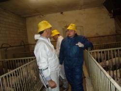Landwirtschaft News & Agrarwirtschaft News @ Agrar-Center.de | Agrar-Center.de - Agrarwirtschaft & Landwirtschaft. Foto: Tierärzte bei praktischen Übungen im AVA-Kurs.