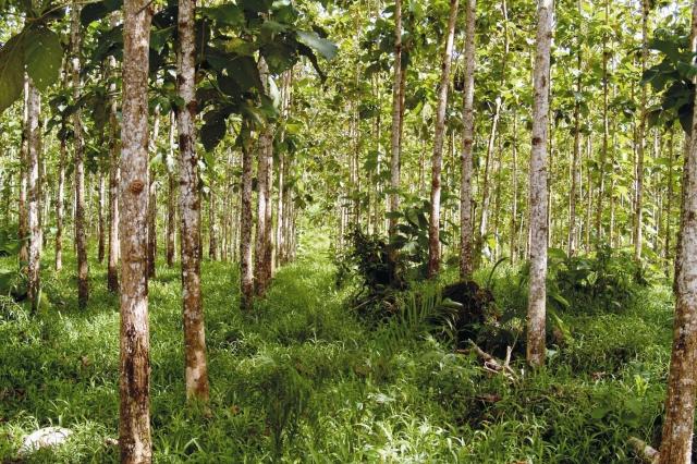Asien News & Asien Infos & Asien Tipps @ Asien-123.de | Forest Finance Service GmbH