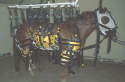 Landwirtschaft News & Agrarwirtschaft News @ Agrar-Center.de | Foto: Pferd mit WNV - Foto: College für Veterinärmedizin an der Kansas State University.