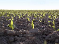 Landwirtschaft News & Agrarwirtschaft News @ Agrar-Center.de | Agrar-Center.de - Agrarwirtschaft & Landwirtschaft. Foto: Die agaSAAT Maishandelsgesellschaft mbH führt 2010 unabhängige Testreihen an 20 deutschen Standorten durch.