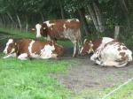 Landwirtschaft News & Agrarwirtschaft News @ Agrar-Center.de | Foto: Chronischer Botulismus in Milchviehehrden.
