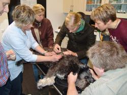 Landwirtschaft News & Agrarwirtschaft News @ Agrar-Center.de | Agrar-Center.de - Agrarwirtschaft & Landwirtschaft. Foto: Tierärzte untersuchen in den AVA-Workshopräume einen Hundepatienten.