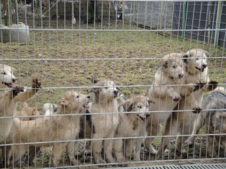 Tier Infos & Tier News @ Tier-News-247.de | Bund Deutscher Tierfreunde e.V.