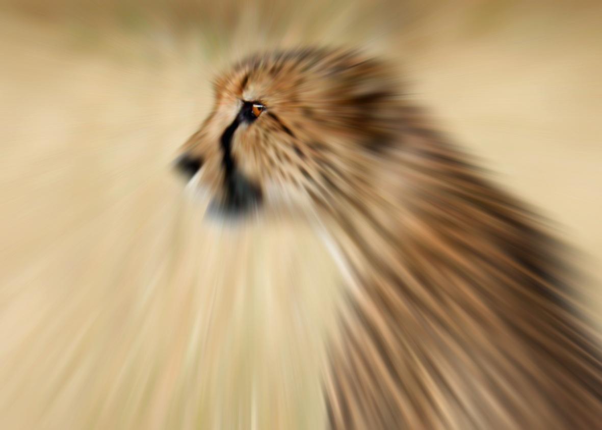 Gepard von Gareth Carter