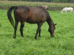 Landwirtschaft News & Agrarwirtschaft News @ Agrar-Center.de | Agrar-Center.de - Agrarwirtschaft & Landwirtschaft. Foto: Schwerpunkt ist das Grundwissen zur Untersuchung und Behandlung von Pferden( Kolik, Auge, Lunge, Kastration (incl. juristische Beurteilung)).