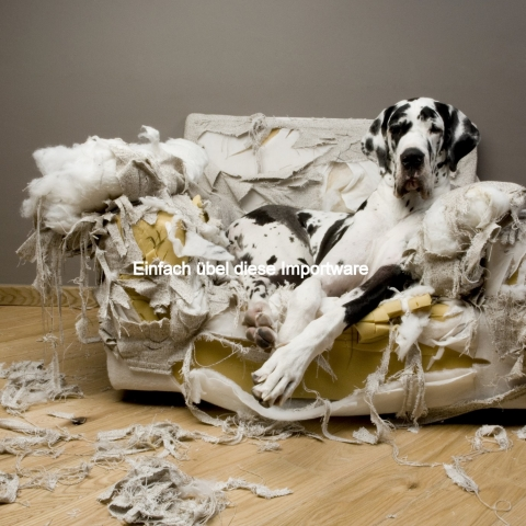 Nordrhein-Westfalen-Info.Net - Nordrhein-Westfalen Infos & Nordrhein-Westfalen Tipps | DoggyBed Hunde Komfortbetten
