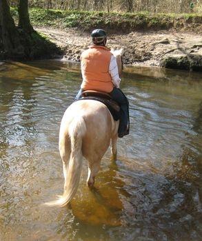 Ost Nachrichten & Osten News | www.mit-pferden-reisen.de