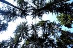 Landwirtschaft News & Agrarwirtschaft News @ Agrar-Center.de | Foto: >> Bäume im Freiflächenmanagement << stehen im Mittelpunkt des 2. GaLaBau-Forums in Thüringen am 19. August 2010 (Foto: S. Brandt).