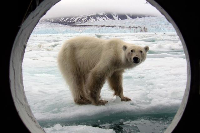 Zoo-News-247.de - Zoo Infos & Zoo Tipps | Polar-Kreuzfahrten