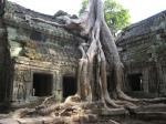 Asien News & Asien Infos & Asien Tipps @ Asien-123.de | Foto: Riesige Tropenbäume umschlingen den Ta Prohm Tempel in der einstigen Königs- und Tempelstadt Angkor in Kambodscha.