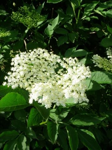 Pflanzen Tipps & Pflanzen Infos @ Pflanzen-Info-Portal.de | Ayurvedaschule Nierstein