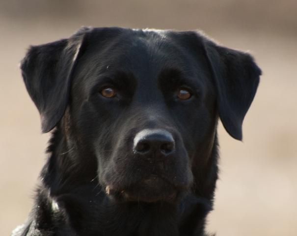 Versicherungen News & Infos | Wir für Ihr Tier UG