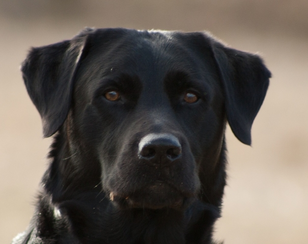 Tier Infos & Tier News @ Tier-News-247.de | Wir für Ihr Tier UG