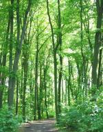 Landwirtschaft News & Agrarwirtschaft News @ Agrar-Center.de | Foto: Holz bietet viele Vorteile: als Werkstoff, als Brennmaterial, als CO2-Speicher und als Sauerstofflieferant.