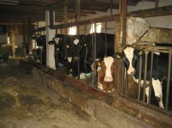 Landwirtschaft News & Agrarwirtschaft News @ Agrar-Center.de | Agrar-Center.de - Agrarwirtschaft & Landwirtschaft. Foto: Quelle: Milchkuhhaltung: www.tierschutzbilder.de mit Bildern und Fotos aus der industriellen Massentierhaltung.