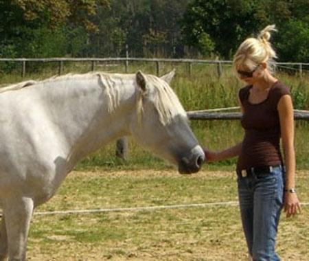 Berlin-News.NET - Berlin Infos & Berlin Tipps | Pferdemomente - Seminare & Coaching mit Pferden