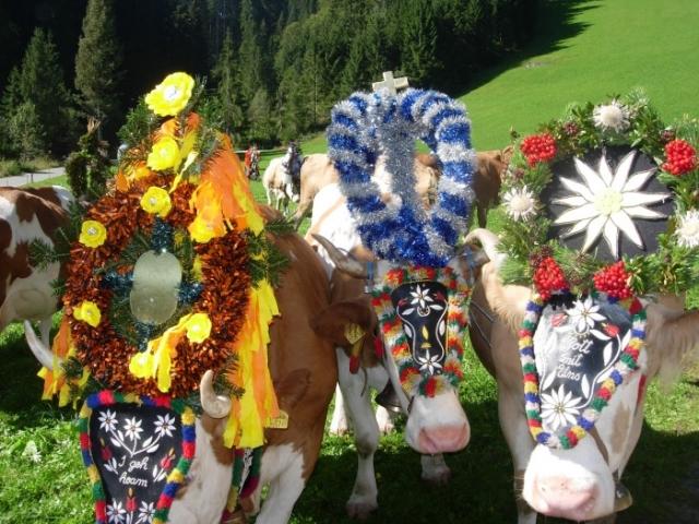Pflanzen Tipps & Pflanzen Infos @ Pflanzen-Info-Portal.de | Tourismusinformation Wildschönau