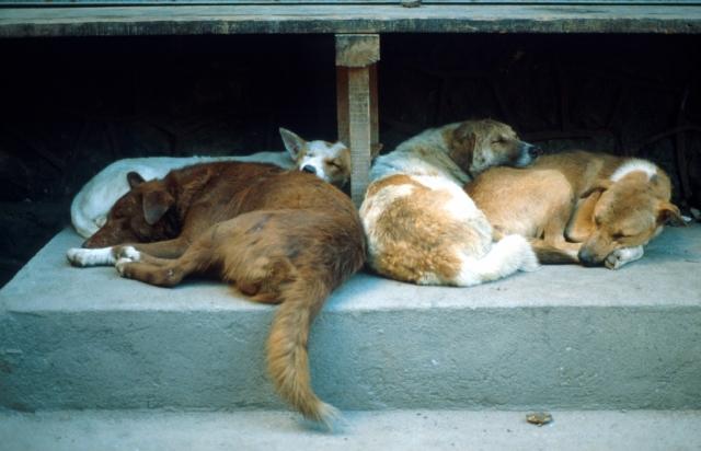 Italien-News.net - Italien Infos & Italien Tipps | Bund Deutscher Tierfreunde e.V.