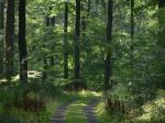 Landwirtschaft News & Agrarwirtschaft News @ Agrar-Center.de | Foto: Die Produkte der Forst- und Holzwirtschaft lassen sich aus dem täglichen Leben nicht mehr wegdenken.