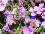 Landwirtschaft News & Agrarwirtschaft News @ Agrar-Center.de | Foto: Blühende Landschaften bieten den Wildbienen einen nahrhaften Lebensraum - davon profitieren wir alle.