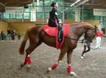 Ost Nachrichten & Osten News | Foto: Zum siebenten Mal in Folge fanden am 13./14.09.08 die Sächsischen Meisterschaften im Voltigieren auf Schlobachshof statt.
