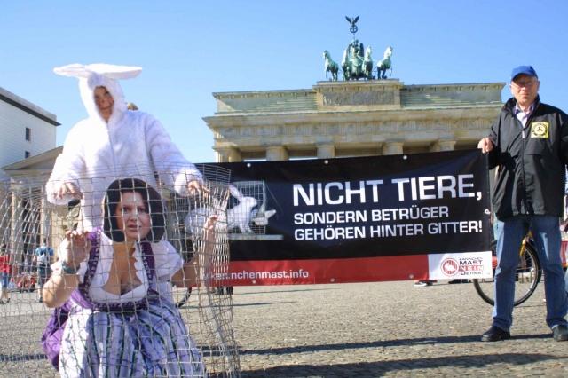 Berlin-News.NET - Berlin Infos & Berlin Tipps | Deutscher Tierhilfe Verband e.V.