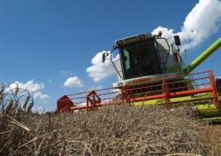 Landwirtschaft News & Agrarwirtschaft News @ Agrar-Center.de | Foto: Getreideernte (Foto: Proplanta).
