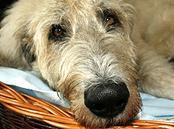Hunde Infos & Hunde News @ Hunde-Info-Portal.de | Hunde Infos & Hunde News @ Hunde-Info-Portal.de. Foto: TIER.TV ist das Multimediaportal für alle Tierfreunde.