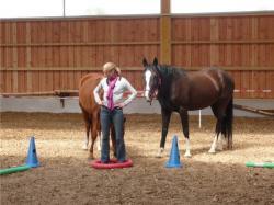 Landwirtschaft News & Agrarwirtschaft News @ Agrar-Center.de | Foto: Coaching mit Pferden in Potsdam / Brandenburg.