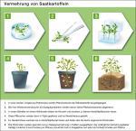 Landwirtschaft News & Agrarwirtschaft News @ Agrar-Center.de | Foto: Saatgutvermehrung.