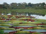 Tier Infos & Tier News @ Tier-News-247.de | Foto: Das Pantanal © Raphael Milani/ Flickr.