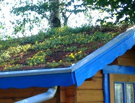 Fertighaus, Plusenergiehaus @ Hausbau-Seite.de | Dachbegrünung von Dachdecker Rösrath