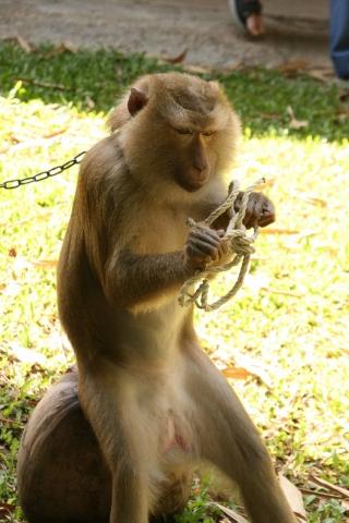 Tier Infos & Tier News @ Tier-News-247.de | Bei Öffnen eines Knoten