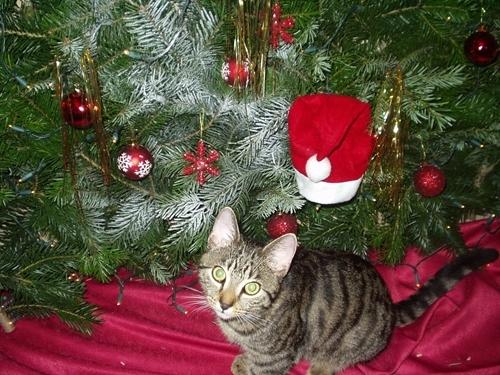 BIO @ Bio-News-Net | tierhilfe e.V. Strasburg warnt: Tiere sind keine Weihnachtsgeschenke