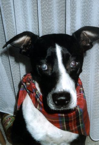 BIO @ Bio-News-Net | Schokoweihnachtsmänner können Haustiere krank machen