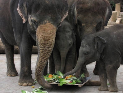 Zoo-News-247.de - Zoo Infos & Zoo Tipps | Soraya läßt sich ihre