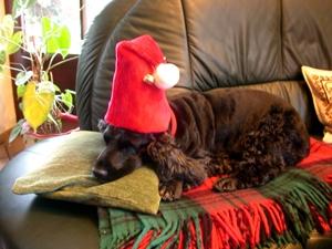 Paris-News.de - Paris Infos & Paris Tipps | Tiere sind keine Weihnachtsgeschenke