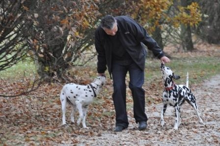 Tier Infos & Tier News @ Tier-News-247.de | Ein Spaziergang mit Hunden entspannt Hund und Halter - aber für den Fall der Fälle sollte man gerüstet sein