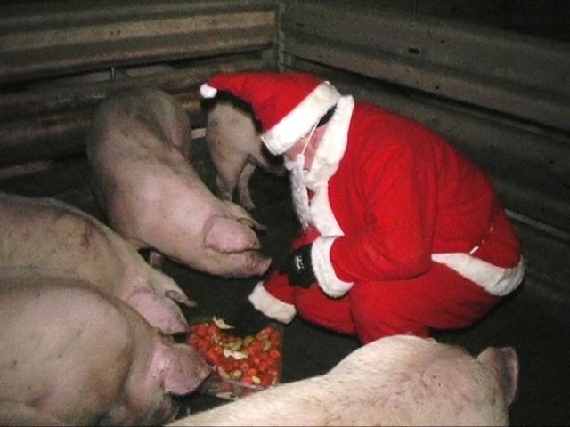 Sport-News-123.de | Weihnachtsmann bei den Tieren