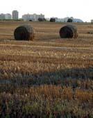 Landwirtschaft News & Agrarwirtschaft News @ Agrar-Center.de | Foto: Die menschliche Landdominanz und mögliche Konsequenzen für die Zukunft werden nun erstmals über einen Zeitraum von drei Jahrhunderten analysiert.