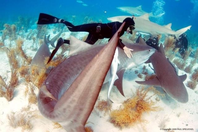 Tickets / Konzertkarten / Eintrittskarten | Taucher schwimmt mit Haien © Paul Spielvogel